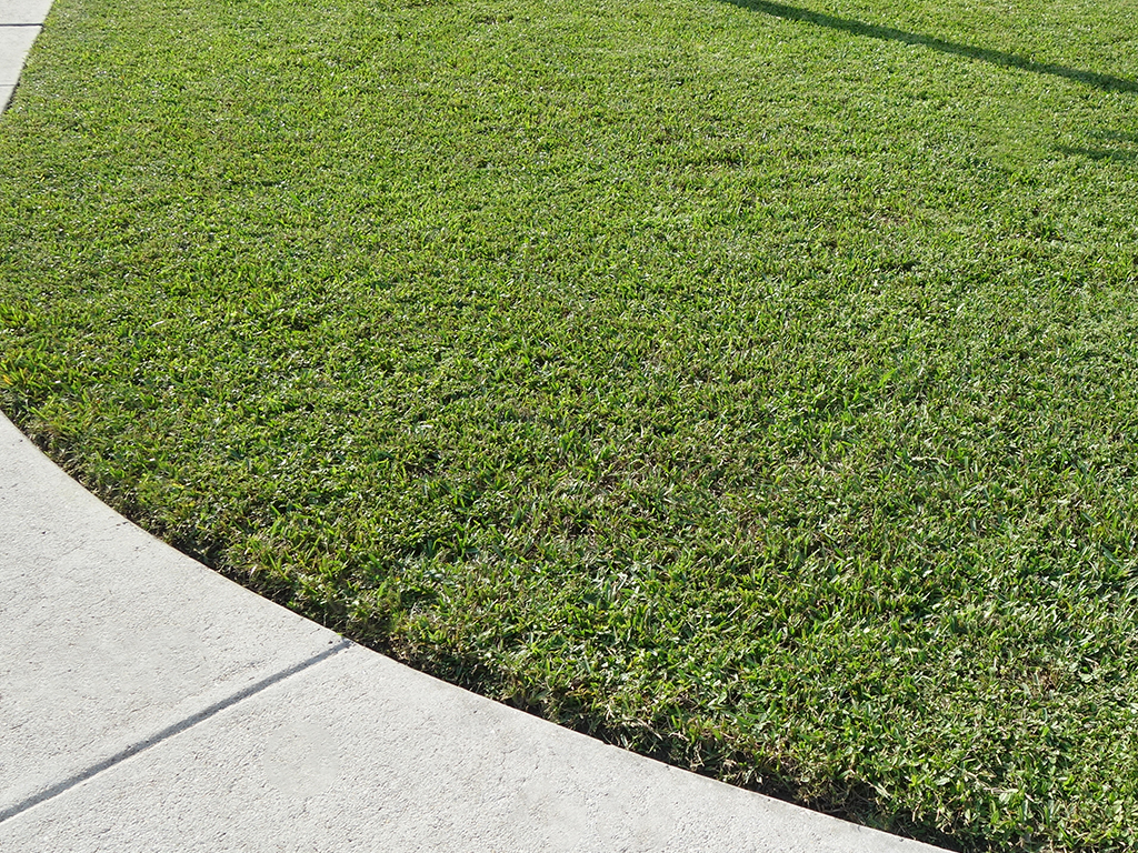 4 Ways To Care For Your Lawn And Keep It Weed Free